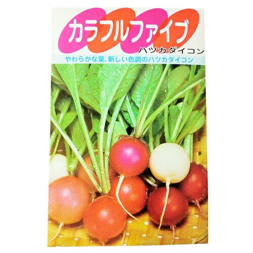廿日大根 種 【カラフルファイブ】 小袋(約7ml) ( 種 野菜 野菜種子 野菜種 )