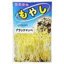 スプラウト 種 【モヤシ ブラックマッペ】 50ml ( 種 野菜 野菜種子 野菜種 )