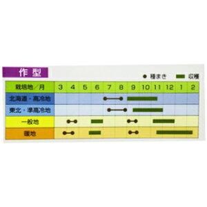 味いちばん紫(大根の種)40ml