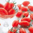 トマト 種 【 ミニトマト アイコ 】 実咲小袋(17粒) ( トマトの種 )