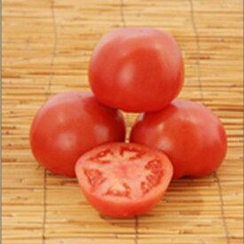 トマト 種 【 大安吉日 】 小袋(20粒) ( トマトの種 )