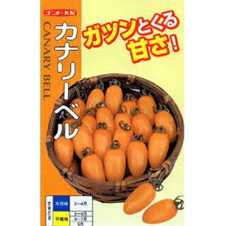 ミニトマト 種 【カナリーベル】 500粒 ( 種 野菜 野菜種子 野菜種 )