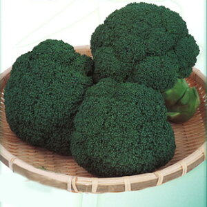 ブロッコリー種【おはよう】2000粒(種野菜野菜種子野菜種)