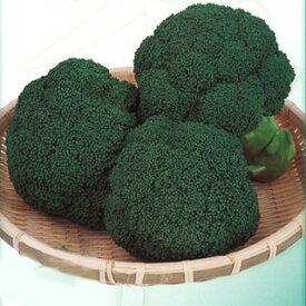 ブロッコリー 種 【 おはよう 】 2000粒 ( 種 野菜 野菜種子 野菜種 )