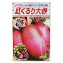 大根 種 【紅くるり】 3ml ( 種 野菜 野菜種子 野菜種 )