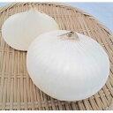 たまねぎ 種 【 ホワイトベアー 】 20ml ( 種 野菜 野菜種子 野菜種 )