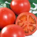 【エントリーでポイント10倍】 トマト 種 【 りんか409 】 ペレット1000粒 ( トマトの種 )