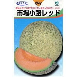 市場小路レッド (メロンの種) 100粒 【種子(野菜) 販売】