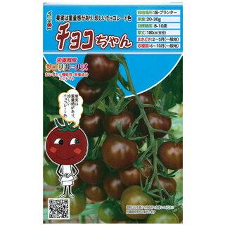 ミニトマト 種 【 チョコちゃん 】 8粒 ( 種 野菜 野菜種子 野菜種 )