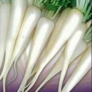 大根 種 【 白茎亀井戸 】 種子 2dl缶 ( 種 野菜 野菜種子 野菜種 )