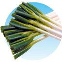 ネギ 種 【 龍ひかり2号 】 種子 2Lコート6千粒ビン ( 種 野菜 野菜種子 野菜種 )