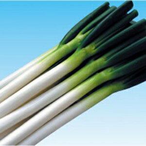 ネギ 種 【 龍輝(りゅうき) 】 種子 小袋(約20ml) ( 種 野菜 野菜種子 野菜種 )