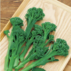 茎ブロッコリー 種 【 グリーンボイス 】 小袋(約0.9ml) ( 茎ブロッコリーの種 )