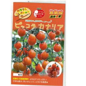 ミニトマト 種 【ピッコラカナリア】 8粒 ( 種 野菜 野菜種子 野菜種 )