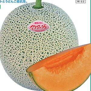 メロン 種 【 マリアージュ盛夏系 】 6粒 ( メロンの種 )