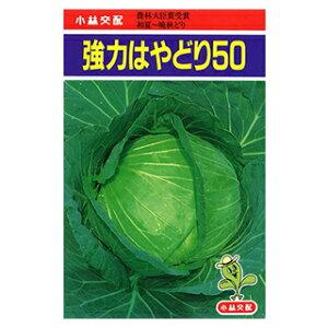 キャベツ 種 【 強力はやどり50 】 小袋(20ml) ( キャベツの種 )