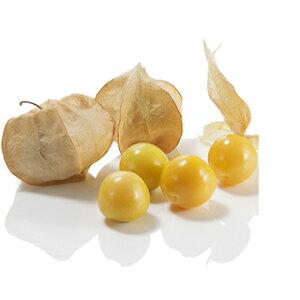 食用ほおずき 種 【 キャンディーランタン 】 小袋(100粒 コートSサイズ) ( 食用ほおずきの種 )