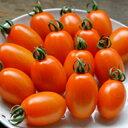 トマト 種 【 オレンジなつめっ娘 】 小袋(10粒) ( トマトの種 )