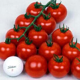 トマト 種 【 ワンダーボール50 】 小袋(100粒) ( トマトの種 )