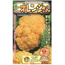 カリフラワー 種 【 オレンジさん 】 小袋(25粒) ( カリフラワーの種 )