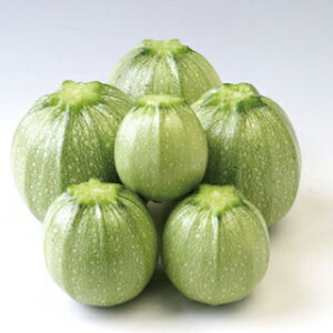 ズッキーニ 種 【 パリーノオリーブ(丸・薄緑) 】 小袋 ( ズッキーニの種 )