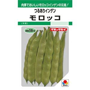 つる有菜豆 種 【 モロッコ GF 】 小袋(55ml) ( つる有菜豆の種 )