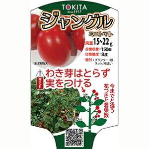 ミニトマト 種 【 ジャングルトマト 】 小袋 ( ミニトマトの種 )