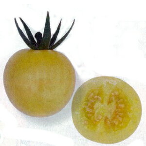 ミニトマト 種 【 サンシトロン 】 100粒 ( ミニトマトの種 )