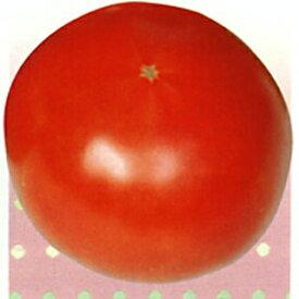 大玉トマト 種 【ダックス】 1ml ( 種 野菜 野菜種子 野菜種 )