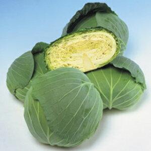 キャベツ 種 【 彩里 】 種子 小袋(約1.3ml) ( 種 野菜 野菜種子 野菜種 )