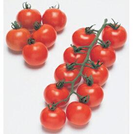 中玉トマト 種 【フルティカ】 100粒 ( 種 野菜 野菜種子 野菜種 ) ★