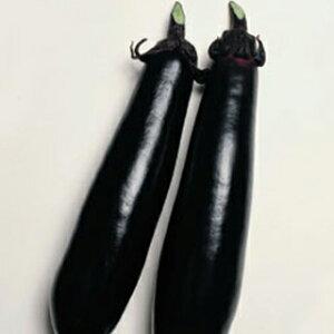 なす 種 【黒陽】 RF 40粒 ( 種 野菜 野菜種子 野菜種 ) ★