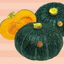 かぼちゃ 種 【えびす】 500粒 ( 種 野菜 野菜種子 野菜種 )