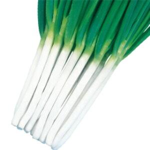 ネギ 種 【 秀逸 】 種子 2dl ( 種 野菜 野菜種子 野菜種 )