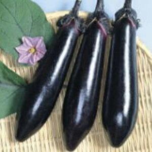 なす 種 【黒東長 (こくとうなが)】 20ml ( 種 野菜 野菜種子 野菜種 )