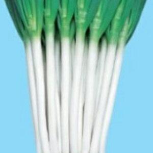 ネギ 種 【 白林 】 種子 2dl ( 種 野菜 野菜種子 野菜種 )