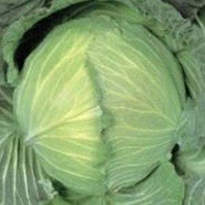 キャベツ 種 【 冬穫B号 】 種子 小袋(約1.5ml) ( 種 野菜 野菜種子 野菜種 )