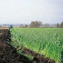 緑肥 種 【 えん麦 野生種 ヘイオーツ 】 20kg ( 緑肥の種 )