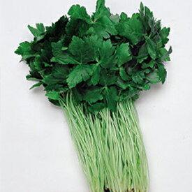 三つ葉 種 【 白茎ミツバ (関西系) 】 種子 小袋(約15ml) ( 種 野菜 野菜種子 野菜種 )