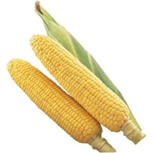 トウモロコシ 種 【 夏まき味甘ちゃん 】 小袋(約65粒) ( トウモロコシの種 )