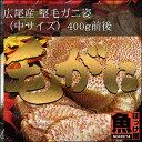 北海道 広尾産 堅毛ガニ姿(中サイズ)1杯 400g前後【10P03Dec16】