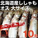 北海道(広尾産)ししゃも オス 大サイズ 10尾 【本ししゃも】【10P03Dec16】