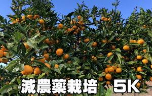 こだわり汐風みかん 5kg 減農薬栽培 果物・野菜ソムリエ が作る!激オシ【送料無料】海水散布!高級サンゴ散布でミネラルたっぷり 美味しいミカン・九州熊本県みかん熊本蜜柑 おいしいく