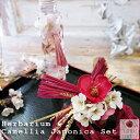 ★送料無料★特別セット★『Herbarium & Camellia Japonica Set』ハーバリウムと椿のしめ縄リースのセット