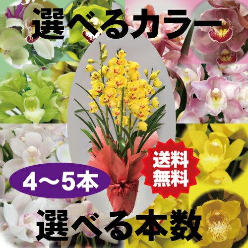 選べるシンビジューム4〜5本立ち 送料無料。