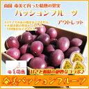 奄美パッションフルーツ アウトレット 2.5kg【送料無料】【冷蔵】