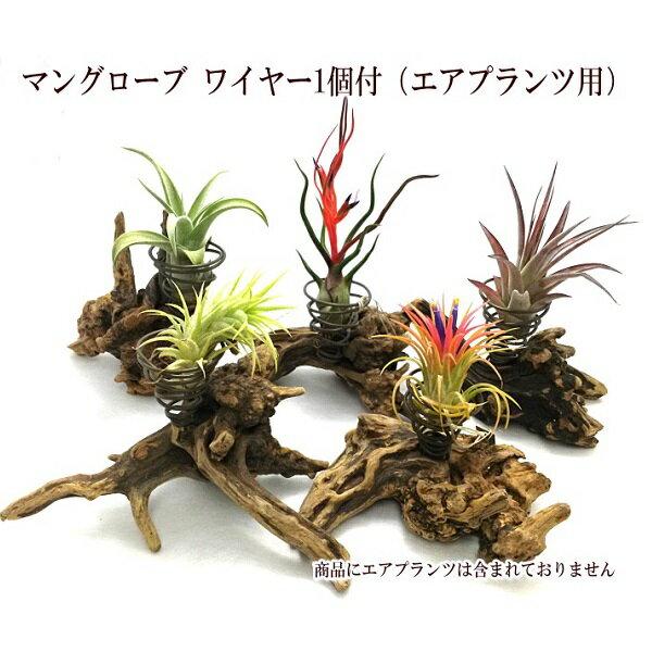 マングローブ 置型 ワイヤー1個付(エアプランツ用)【植物は商品に含まれておりません】