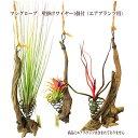 マングローブ 壁掛け型 ワイヤー1個付(エアプランツ用)【植物は商品に含まれておりません】