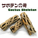 サボテンの骨 1個【カクタススケルトン】【カクタスボーン】【サイズ(約)・長さ10〜17cm・直径5〜8cm】