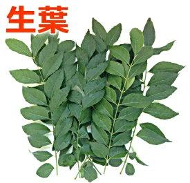 【生産者様直送】無農薬 国産 カレーリーフの葉 生葉 約150g